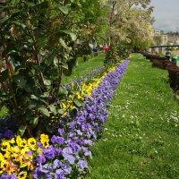 Цветная весна :: Вальтер Дюк