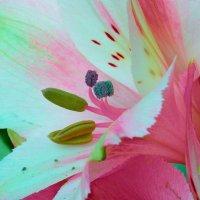 Внутри цветка 3 :: Владимир Богославцев(ua6hvk)