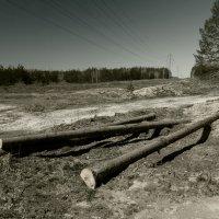 здесь был лес... :: сергей крючков