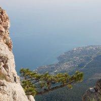 И на скалах растут деревья :: Татьяна Хлудеева