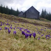 Весна на полоныне :: Саня Ткачук