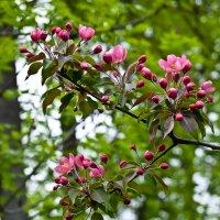 Весна :: Наталья Rosenwasser