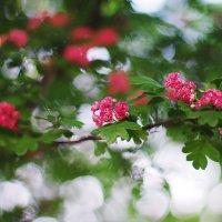 Фото_1 :: Ирина Цой