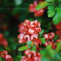 Цветы :: Ирина Цой