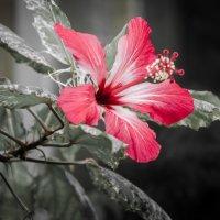 Красота :: Seda Yegiazaryan