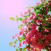 Pink rising :: Андрей Малик