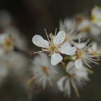 нежность весны.... :: Марина Брюховецкая