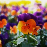 Веселое разноцветие :: Лара Leila