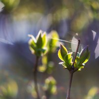 весна  пришла) :: Ольга Афанасьева