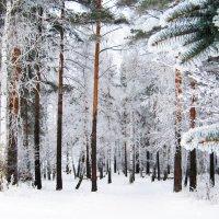 Зима :: Алексей Васильев
