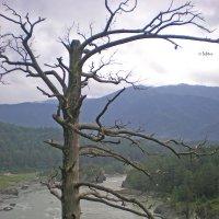 дерево :: Мария Барановская