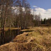 весна :: Борис Устюжанин