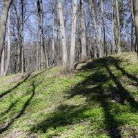В лесу :: Владимир Белов