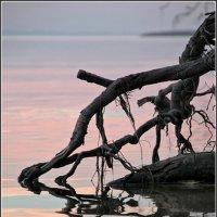 Розовый вечер :: Андрей Ясносекирский