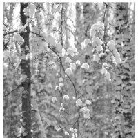 Зима :: Валентин Горбенко