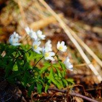 С весной! :: Валерия заноска