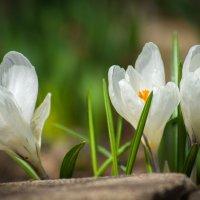 Весна!!! :: Игорь Хохлов