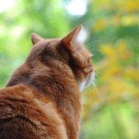 *Мой кот Кокос!!! :: Виталий Виницкий