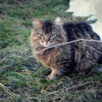 Важный котик :: Mariya Bryuchova