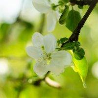 Весна :: Serj Serj