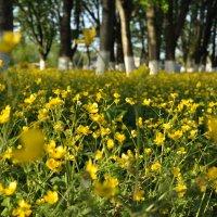 Желтый денек :: Юля Мельникова