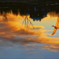отраженно -закатный полет :: Ирэна Мазакина