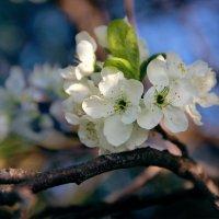 люблю весну :: Sunny Anny