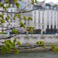 Весна в Париже :: Sofia Rakitskaia