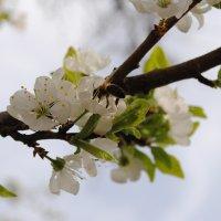 Веточка и пчела :: Дарья Лихтар
