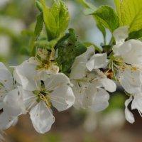 Весна :: Дарья Лихтар
