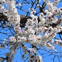 Краски весны 3 :: Ольга Савотина