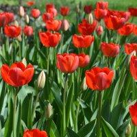 Краски весны 2 :: Ольга Савотина