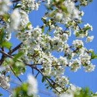 Краски весны 5 :: Ольга Савотина
