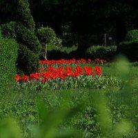Тем временем  в Ботаническом саду... :: Ирина Чумакова