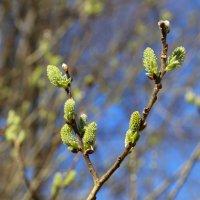 Весна :: Ольга Соболева