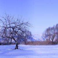Зимняя яблоня. :: Валентина Коннова