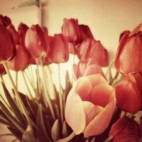 39 красных тюльпанов :: Евгения Ганжа