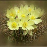 Букет весны :: galina tihonova