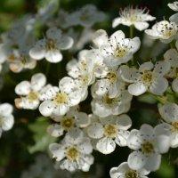 Весенний цвет :: Ольга Рыбакова