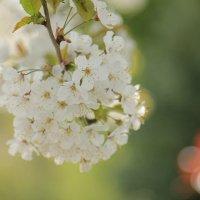 flower :: Anastasia Petrova