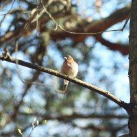 Птичка :: Елизавета Конова