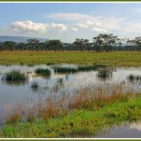 Разлив озера Накуру :: Евгений Печенин