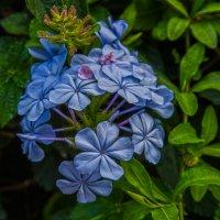 Городские цветы :: Vladislav Ayzenberg