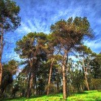Когда деревья были большими :: Vladislav Ayzenberg