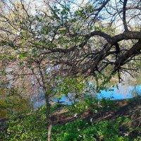 весна на берегах Оки :: Светлана Абросимова