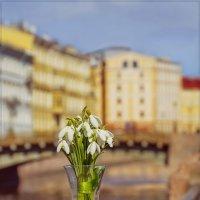 цветы для любимого города. :: Ирэна Мазакина