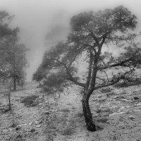 Деревце в облаке :: Sergey Sergeev