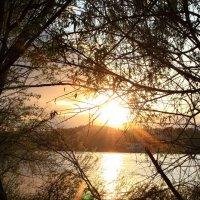 Лесной закат :: Дмитрий Черепанов