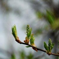 запоздалая весна :: Лилия Еськина