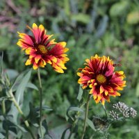 цветы :: alexander halezin